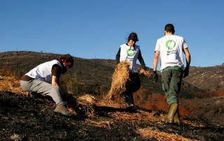 voluntariado forestal